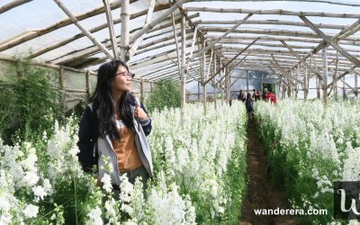 Northern Blossom Flower Farm Atok, Benguet : What You Should Know