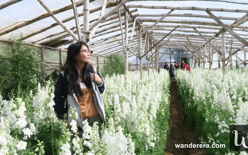 Northern Blossom Flower Farm Atok Benguet What You Should Know