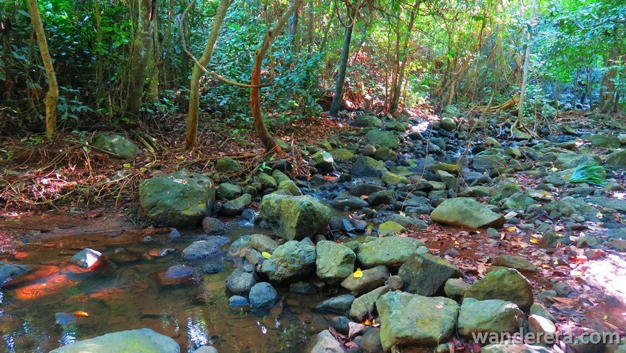 Creek in Palaui