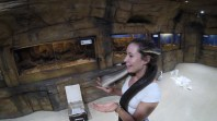 Meeting Ziggy at Alice Springs Reptile Centre