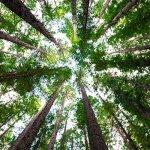 Wander Through the Redwoods in California