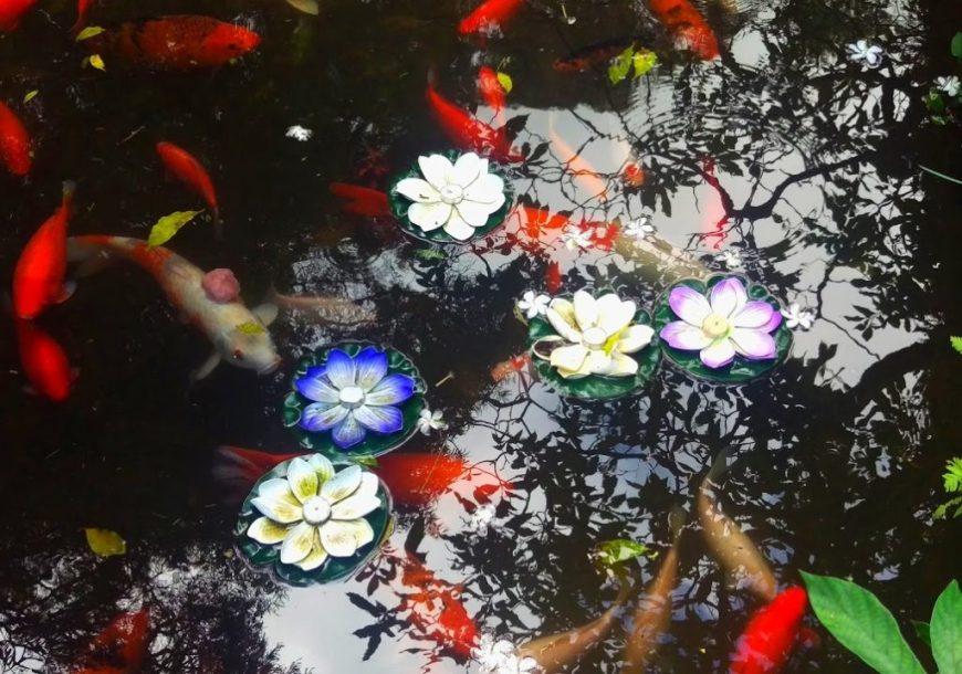 Koi Pond, Hawaii