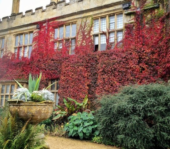 Sudeley Castle covered in ivy