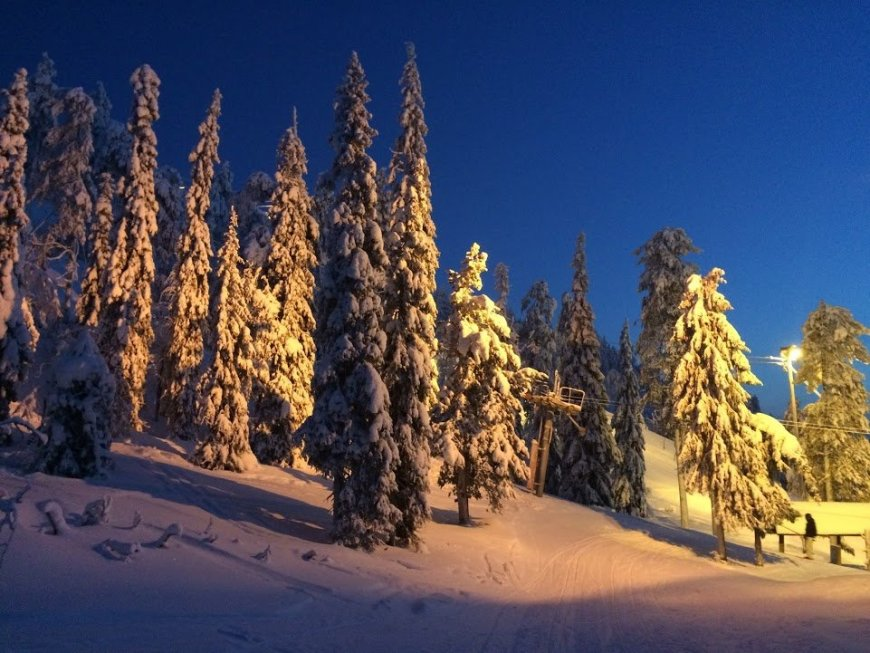 Snowy trees in Finland