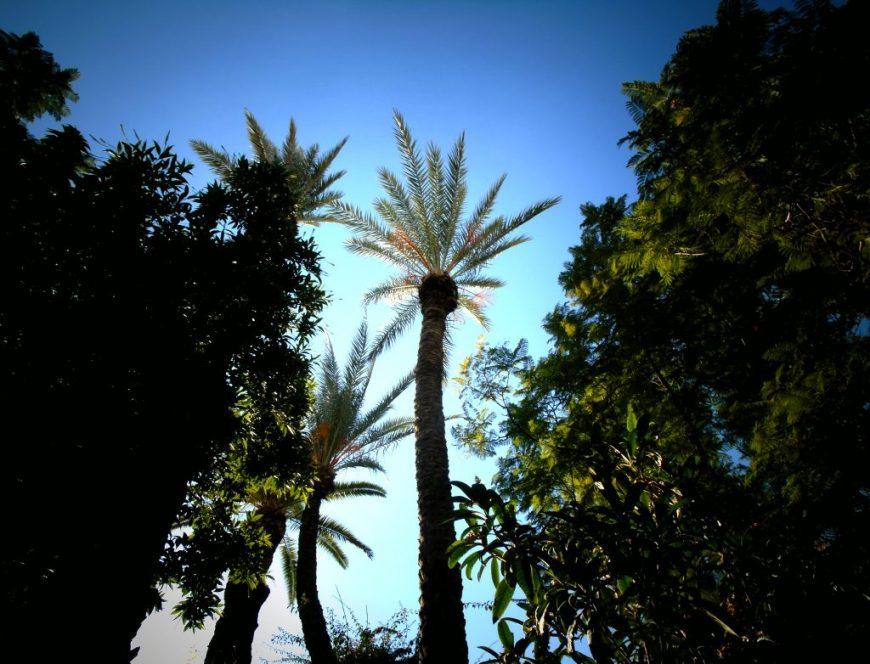 Bahia Palace Palm Trees