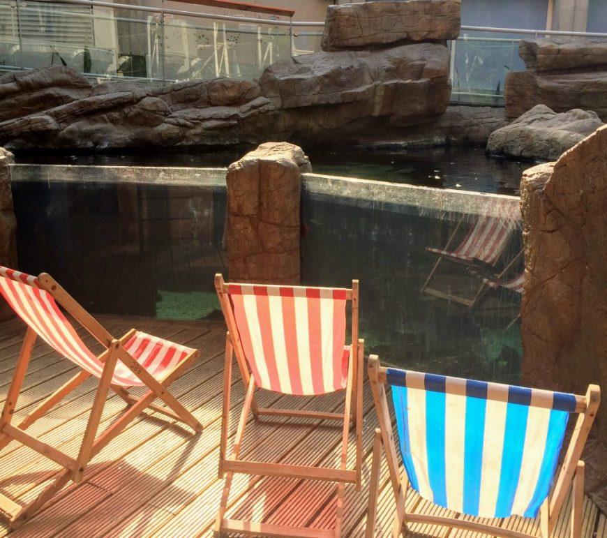Sunny deckchairs at the Bristol Aquarium