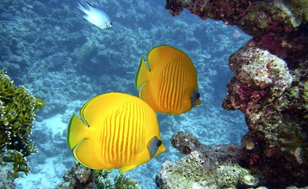 The Complete Guide to Snorkelling for Beginners