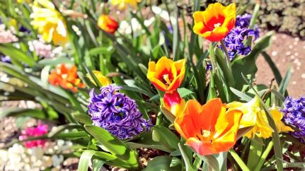 Hanbury Hall Flowers