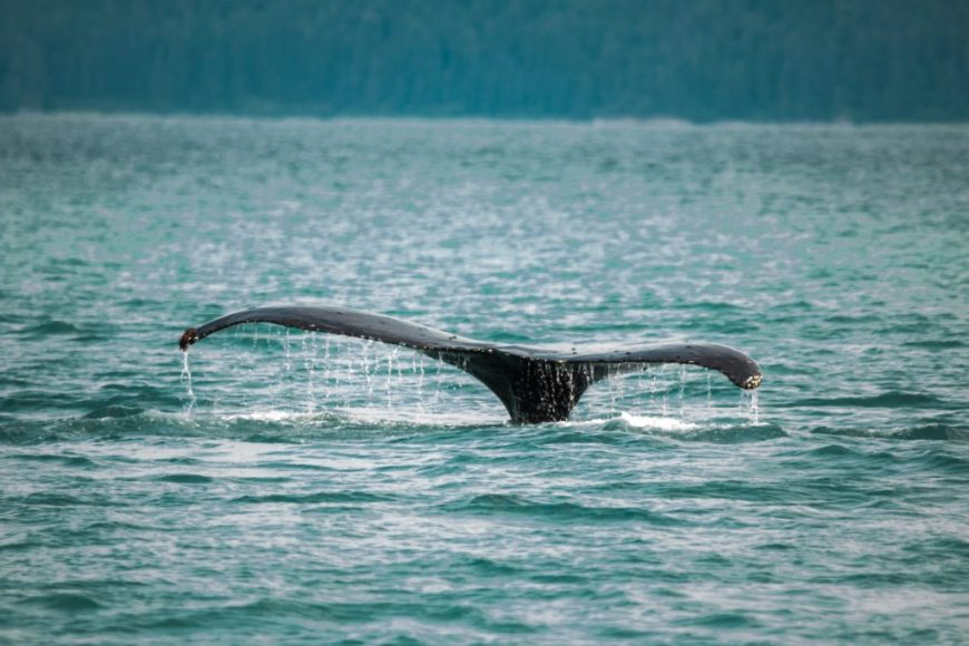 2-Hour Whale Watching Excursion from Lahaina Harbour, Hawaii