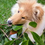 National Trust Dog Friendly Places [Contains Free Directory]