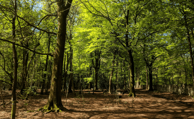 Lovely Dog Walks in Bristol: Leigh Woods