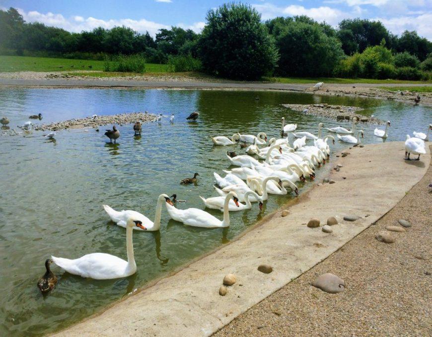 Slimbridge Wetland Centre
