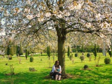 Justine sitting under cherry blossom