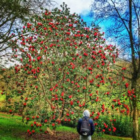 Scott standing under a tree at Stourhead in Dorset, UK