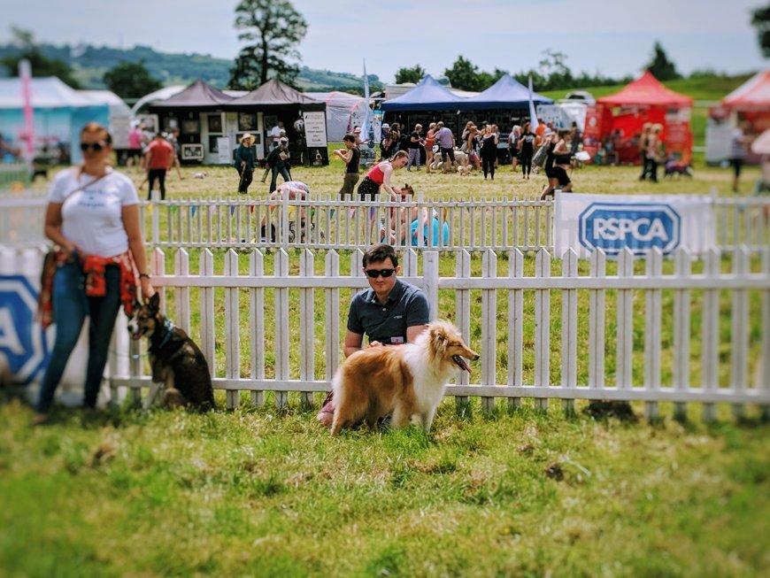 DogFest Bristol