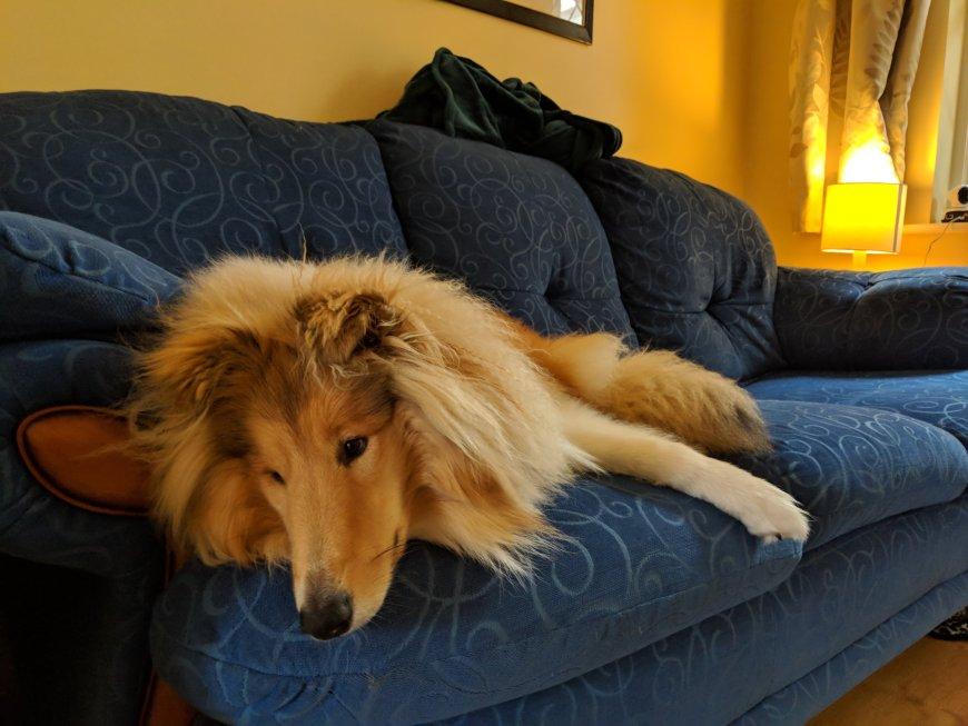 Kai all comfy on the sofa