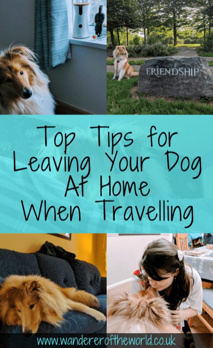 Travelling Without Your Dog: Important Things To Know