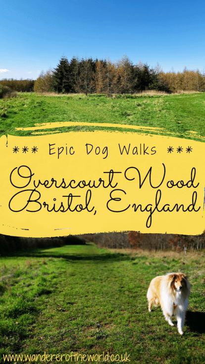 Lovely Dog Walks in Bristol: Overscourt Wood