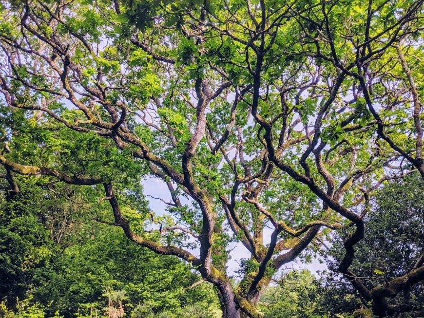 Andrewshayes Holiday Park - Woodland Walk