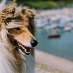 The Perfect Dog Friendly Weekend Getaway in Devon