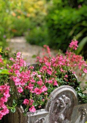 Burrow Farm Gardens