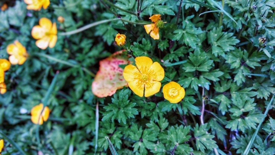 Pontsticill Reservoir Flowers