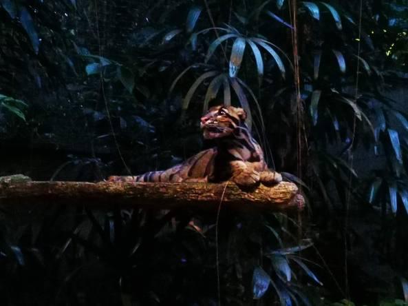 Clouded Leopard inside Singapore Night Safari