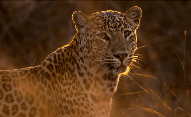 The Brutal Truth About Animal & Wildlife Tourism