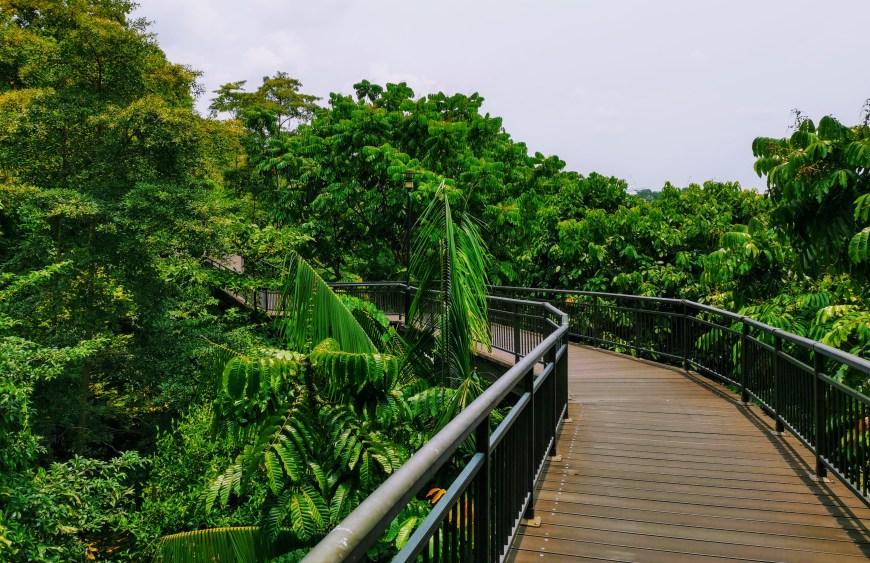 Southern Ridges Hike, Singapore