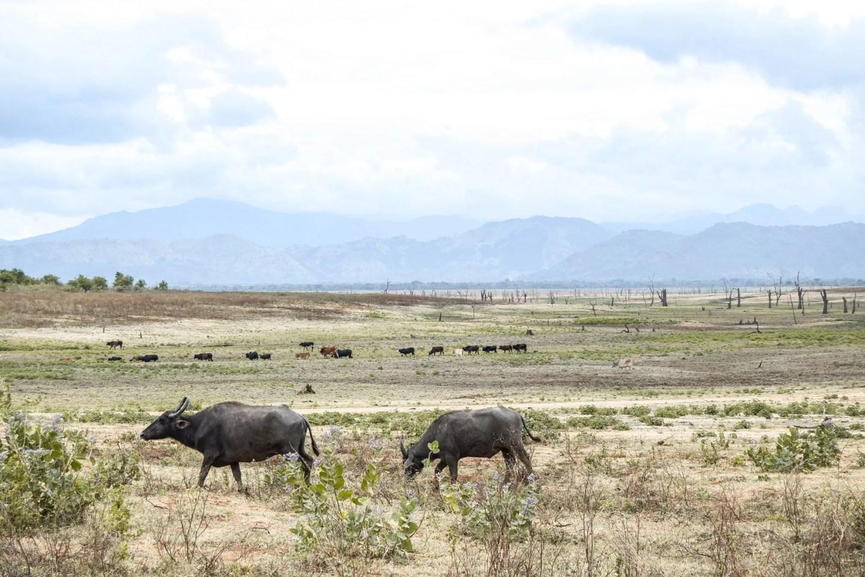Wanderers & Warriors - Charlie & Lauren UK Travel Couple - Udawalawe Safari - Udawalawe National Park - The Best Safari In Sri Lanka