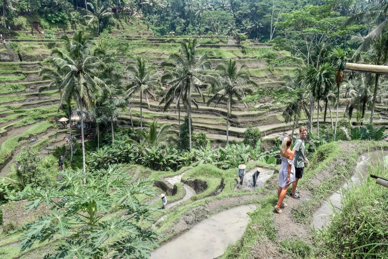 Wanderers & Warriors - Charlie & Lauren UK Travel Couple - The Magical Tegalalang Rice Terraces Ubud Bali - Tegalalang Rice Terrace - Tegalalang Rice Fields - Tegalalang Rice Terrace Entrance Fee