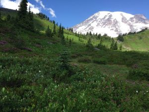Destinations: Mt. Rainier National National Park, Washington