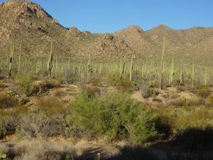 Saguaro National Monument, AZ
