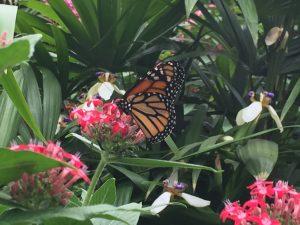 costa rica - la paz butterfly garden