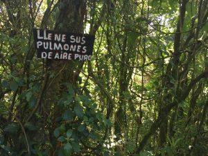 breathe the fresh air. costa rica