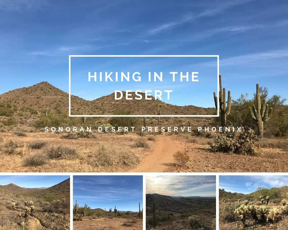 Hiking in the Sonoran Desert Preserve in Phoenix, Arizona