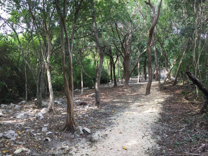 Xel-Ha Ruins trail