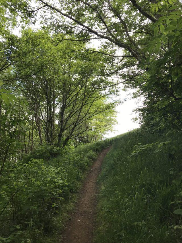 Trail towards the coast