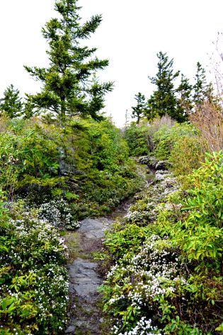 Another shot from the ridge along Maddron Bald Trail