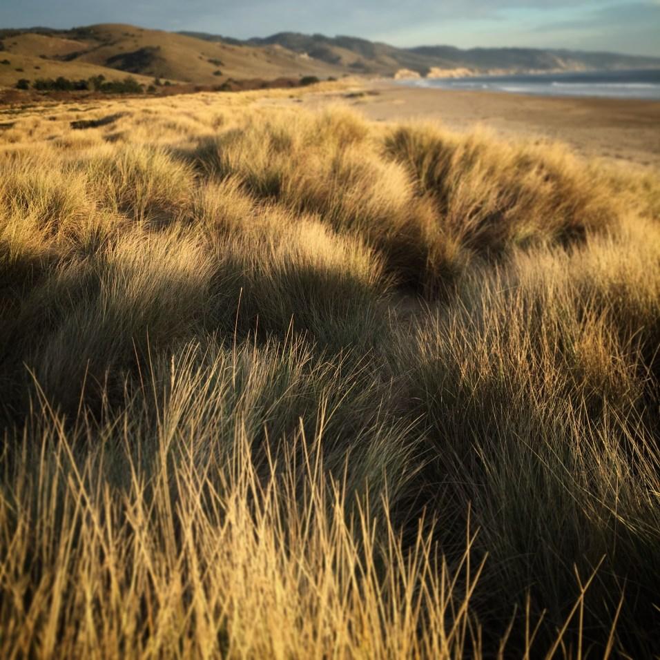 Point Reyes grass