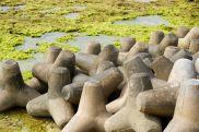 tetrapods to break the tide