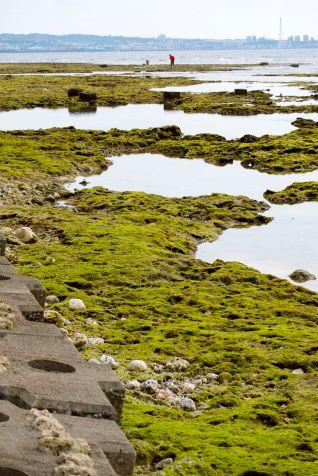 algae tide pools