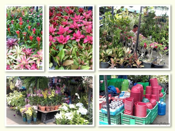 Flowers, flower pots, sprays and fertilizers are also for sale at Sidcor Sunday Market.