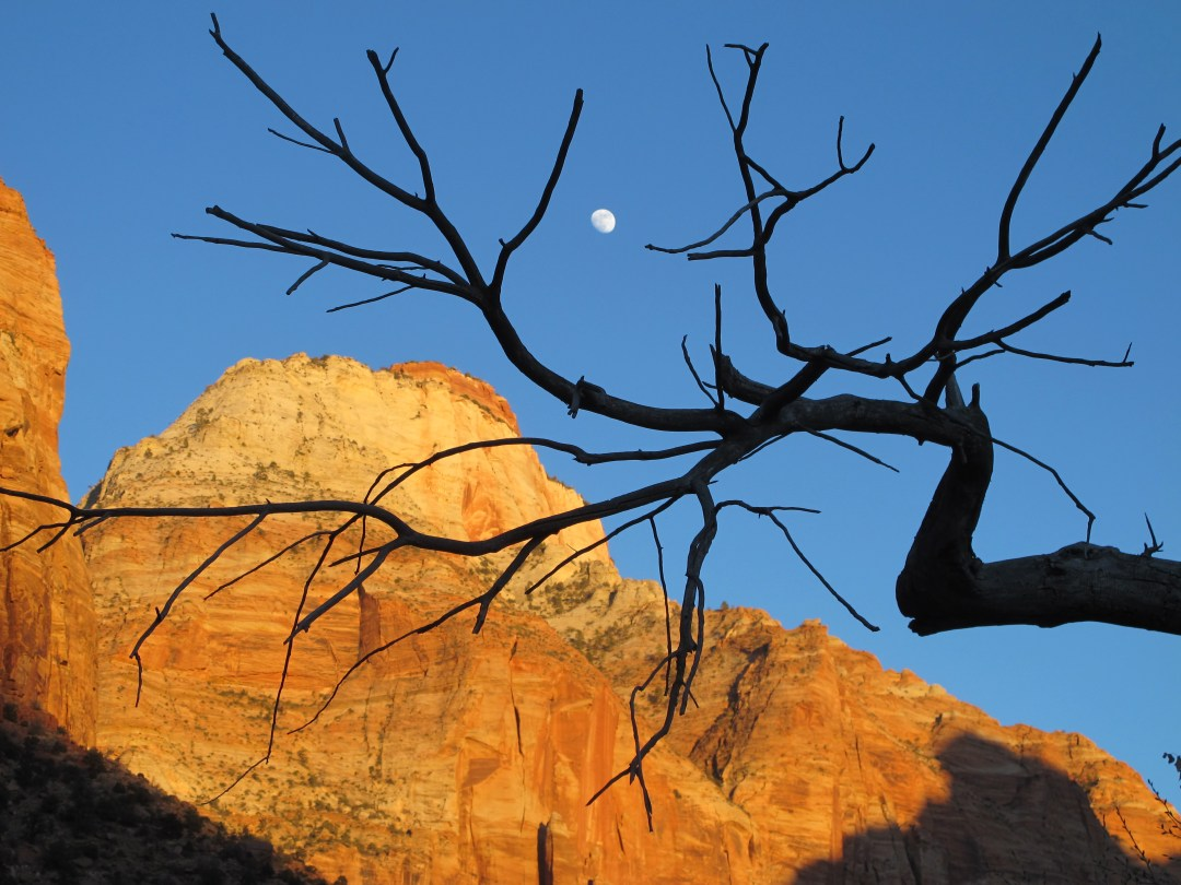 5 Things That Will Enhance Your Zion National Park Experience