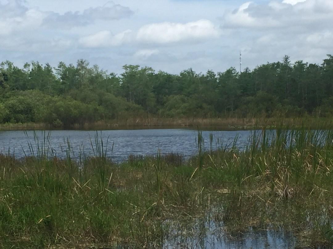 Matt Emerson Wandering But Not Lost Everglades National Park Big Cypress Preserve