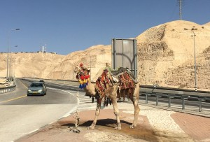 car-with-camel