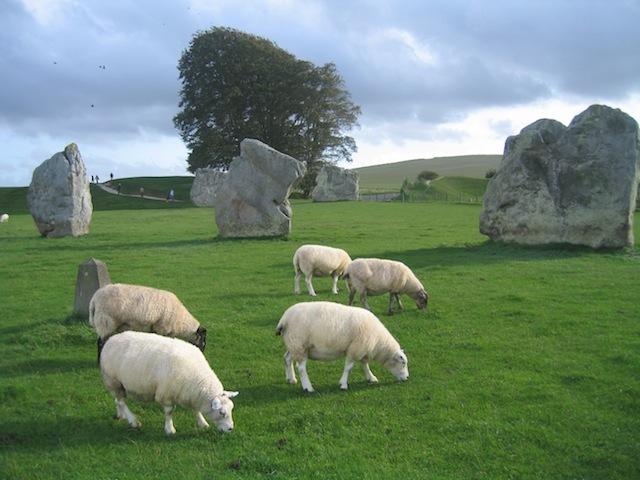 Avebury stone circle and sheep