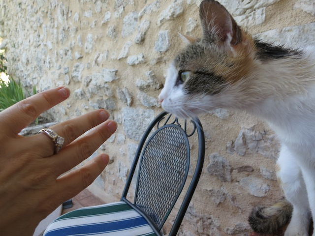 Getting engaged in Umbria, celebrating with a cat