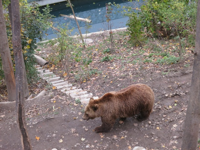 Finn at the Bern Bear Park