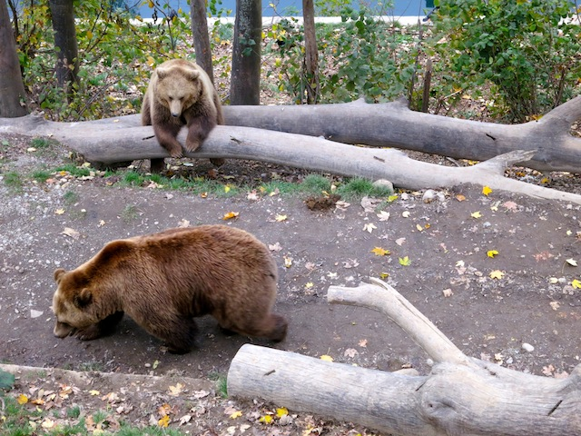 Bjork and Finn Bern Bear Park